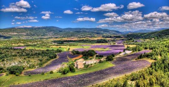 Panorama sur les champs de lavande et le mont Ventoux en Provence (France)